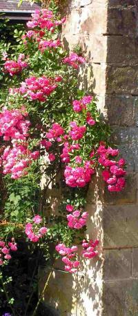 Private garden near Maastricht